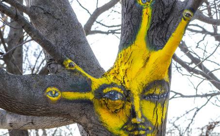 Érdekes festett fák jelentek meg a szegedi Móraváros utcáin
