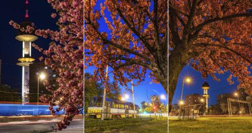 Tavaszi este a szegedi Európa-liget villamosvégállomásnál