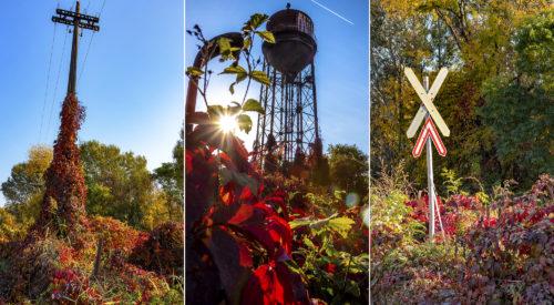 Egy szegedi külvárosi ipartelep őszi szépségei