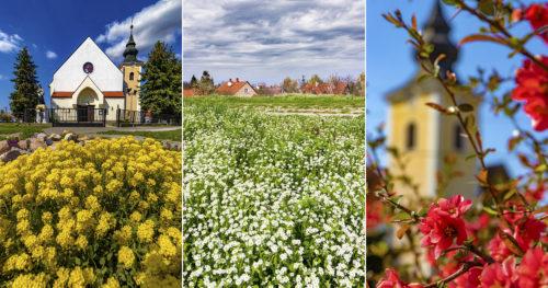Tavaszi színek és hangulatok Tápéról