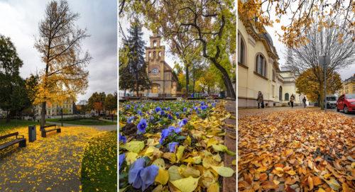 Friss fotók a szürke novemberi időben is színpompás szegedi őszről