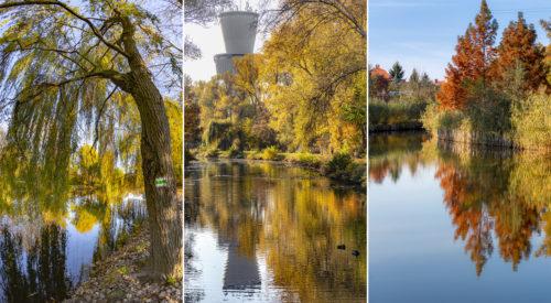 Fotósorozat az őszi Újszegedi Holt-Maros színkavalkádjából